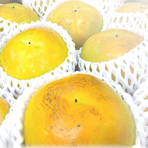 【茶箱】愛媛県産 太秋柿 2kg以上 柿