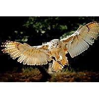 フライングフクロウ動物 - #51493 - キャンバス印刷アートポスター 写真 部屋インテリア絵画 ポスター 90cmx60cm