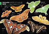 くらべてわかる昆虫 (くらべてわかる図鑑) 画像