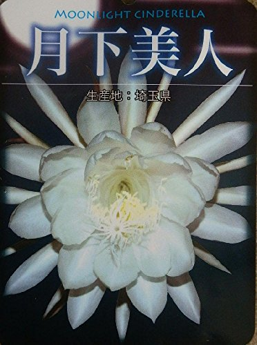月下美人の花言葉6つと名前の由来 花の珍しい特徴と香り
