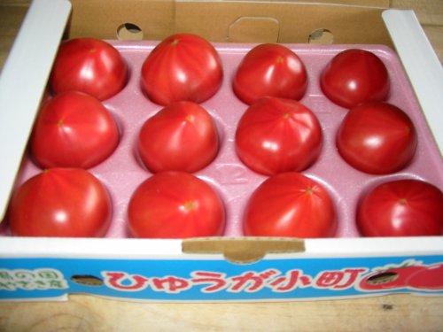 宮崎産 フルーツトマト 日向小町