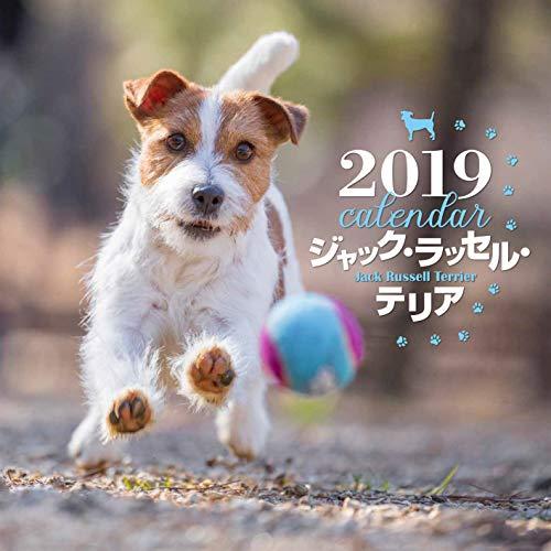 2019年大判カレンダー ジャック・ラッセル・テリア
