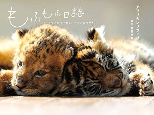 もふもふ日誌 ~仔トラと仔ライオン、ときどきウサギ~の詳細を見る
