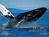 2020年 ワイド判カレンダー 世界で一番美しいクジラ&イルカ カレンダー