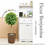 【鉢カバーセット】まんまる仕立てのベンジャミン トピアリー8号♪お洒落な鉢カバーA、受け皿付