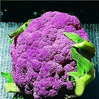 50個ブロッコリー盆栽植物盆栽95%発芽非GMO家宝 野菜盆栽のホームガーデン:3