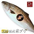 魚水島 新潟 佐度産 天然 鰤 寒ブリ 「佐渡 寒ぶり」 3.0kg~3.9kg 一尾丸もの