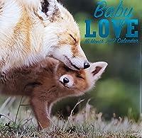 Animals Baby Love 2017 Wall Calendar (16 Months) [並行輸入品]