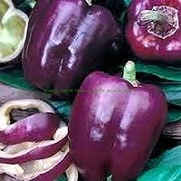 盆栽100個/パック家庭用菜園用ホットチリペッパー有機野菜盆栽:3