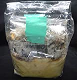クワガタの産卵に! カワラ植菌材(産卵材2本入り)