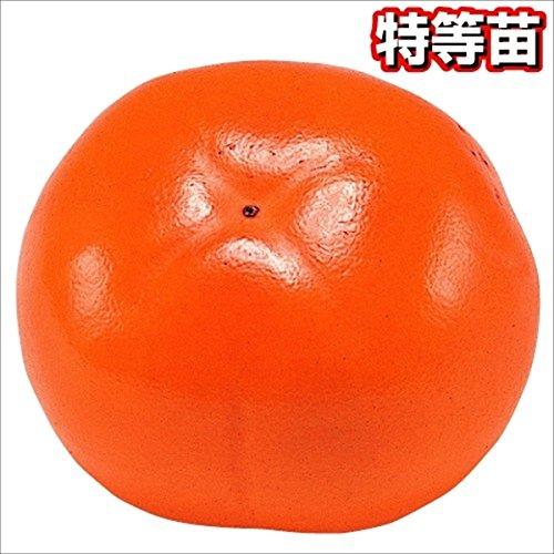 よく知られている柿の種類10個ご紹介|甘柿と渋柿の違いとは