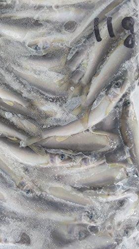 冷凍 国産(滋賀県) 冷凍若鮎(大)1kg(約90尾)×10P 業務用 稚 あゆ 鮎 小