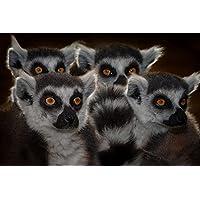 リムース動物 - #35557 - キャンバス印刷アートポスター 写真 部屋インテリア絵画 ポスター 90cmx60cm