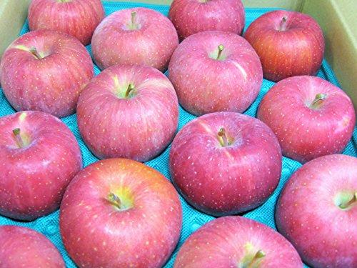 長野県産 生産農家直送りんご サンふじ 中級ランク(秀) 贈答向き&自家用向き 20〜40玉 約10kg箱