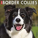Just Border Collies 2022 Wall Calendar