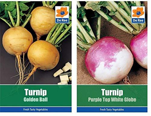 発芽SEEDSだけでなくPLANTS:カブの野菜種子の2つのパケット - ボール&パープルトップエン