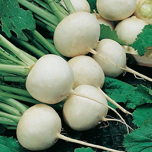 種子パッケージ:野菜カブ雪玉1000個の最高級の種子**無料英国P&P