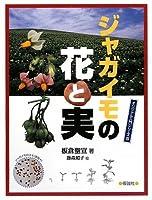 ジャガイモの花と実 (オリジナル入門シリーズ)