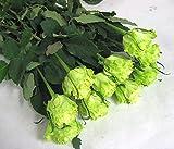 プリティマーメイド 生花 切花 切り花 バラグリーン ライム Gなど5本