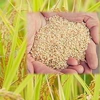 【無農薬 玄米】 5kg×2袋 福井県産 令和元年産 自然農法 米 無農薬米 有機栽培 玄米 無化学肥料