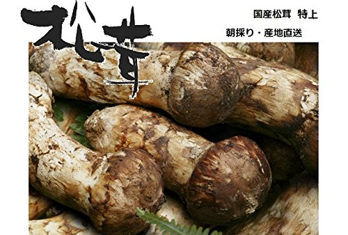 松茸 国産松茸 特上(蕾・中開き) 約100g 会津産・山形県産