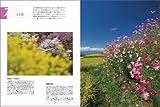 四季の風景撮影 3―レベルアップマニュアル 風景写真力がアップする8つのポイント (日本カメラMOOK) 画像