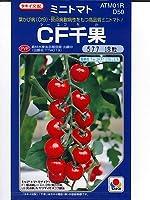 CF千果(1000粒)  タキイ種苗のミニトマト種です