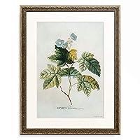 ゲオルク・ディオニシウス・エーレット Georg Dionysius Ehret 「Rubus. 1744」 額装アート作品