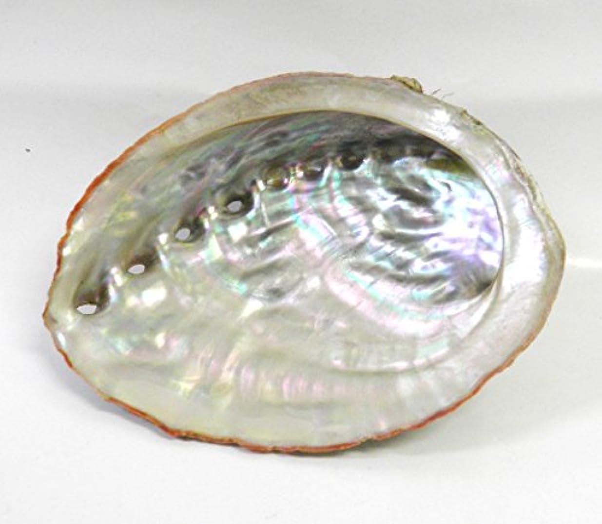 冬振り返るルーキーアワビの貝殻 アバロン シェル ホワイトセージ 浄化用 お香 空間浄化 天然石