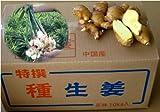 黄金生姜 種生姜 10kg (中国産近江生姜)