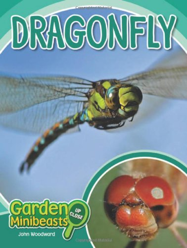 Dragonfly (Garden Minibeasts Up Close)