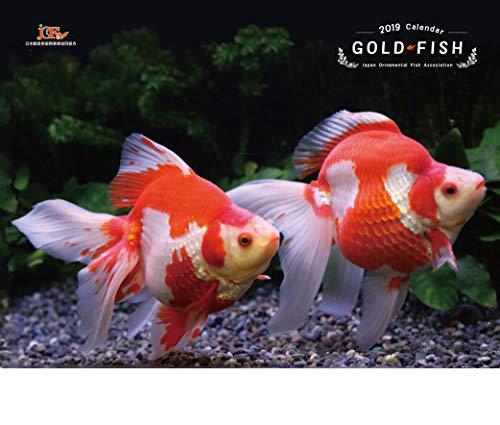 GOLDFISH 金魚カレンダー 2019年