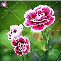 100ピースミックスカーネーション美しい室内フラワーホームガーデン咲く種子ポット最高の包装高生存率:4