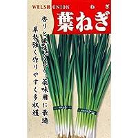 ネギ 種 【 葉ねぎ 】 種子 小袋(約15ml)