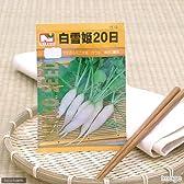 【種子】白雪姫二十日大根 [1510]