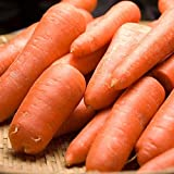 無農薬にんじん 規格外加工用10kg(ふるさと21)・ジュース用