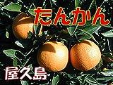 屋久島・奄美産 訳あり たんかん 約10kg入り ご家庭用向き (サイズ混合