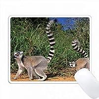 キツネザル、レムール・カタータ、ベレンティ、トリアラ、マダガスカル。 PC Mouse Pad パソコン マウスパッド