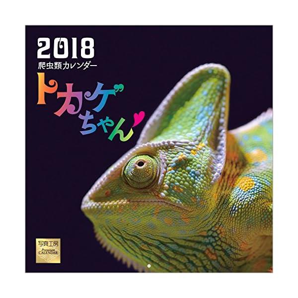 トカゲちゃん 2018年 カレンダー 壁掛け F...の商品画像