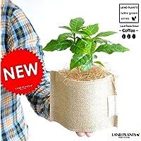LAND PLANTS 【観葉植物】 コーヒーの木 (麻袋の鉢カバーセット)