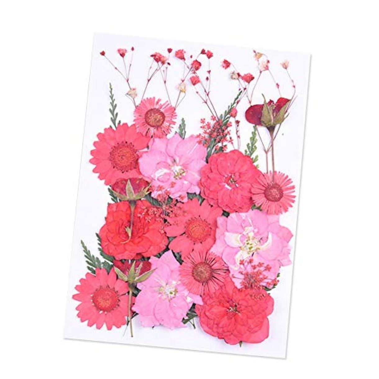 真夜中製油所ハリウッドDried Flowers,ZOZOE Natural Real Dried Flowers Flower Kit Flower Petals and Buds DIY Silicone Coaster Resin Molds...