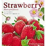 Strawberry 栽培セット