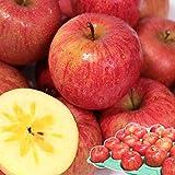 りんご 5kg箱 サンふじ ご家庭用 青森 5キロ箱 林檎