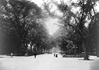 The Mall in Central Park New York City , NYフォト 12 x 18 Art Print LANT-6003-12x18