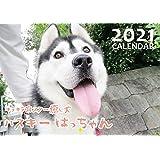 【予約販売】 シベリアンハスキー はっちゃん 2021年 壁掛けカレンダー KK21013