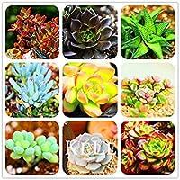 レアスーパーペチュニアの種、プロフェッショナルパック、100個の種子/パック、新年度盆栽ペチュニア#NF660