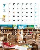 2019カレンダー 柴犬やんちゃな おはなしカレンダー ([カレンダー]) 画像