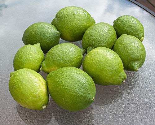 完全 無農薬レモン 10個 約1700グラム リスボン 取立て 黄色く色づく