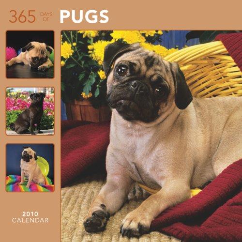 Pugs 365 Days 2010 Wall