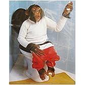 ポスター さる/サル/猿/チンパンジー/トイレ
